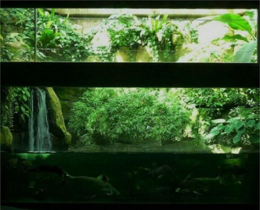 Paludarium Waterfall